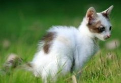 kitten going to toilet in garden