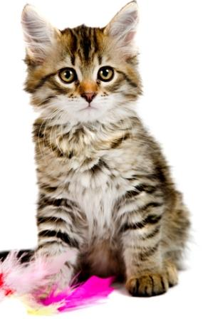 N Cat Names Female Cat Names - Nam...
