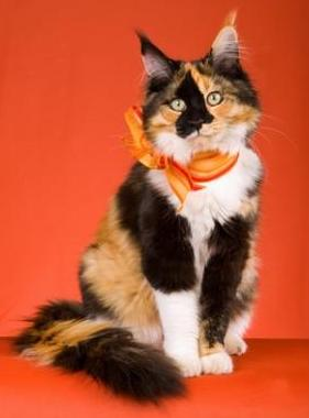 Pretty Flower Names For Cats