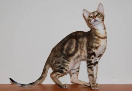 Kadzonzo cat
