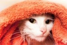 cat after bath