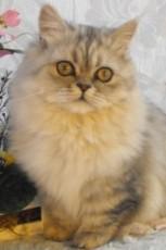 napoleon cat
