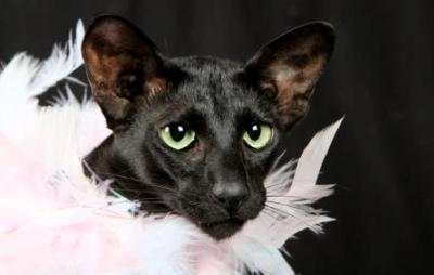 Beautiful Black Cat Names