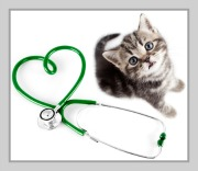 cat infectious diseases