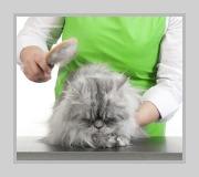 grroming a cat