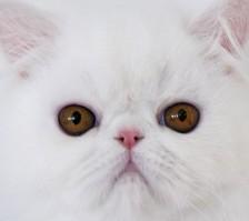 healthy cat nose