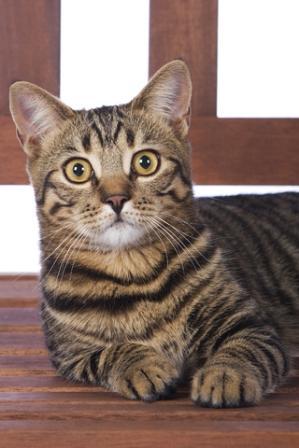 Wild asian cat - 4 5