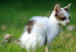 kitten going to toilet in garden