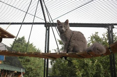 Nebelung in safe enclosure